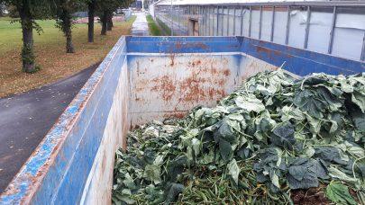 Organisk avfall fra agurkproduksjon. Foto Astrid S. Andersen